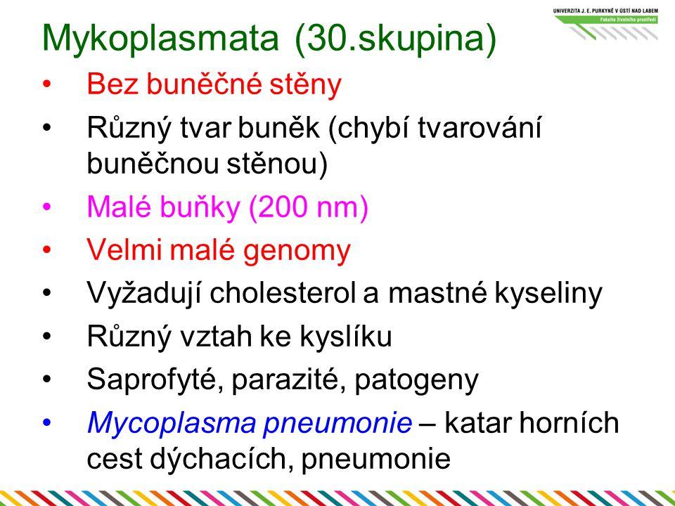 Mykoplasmata (30.skupina)