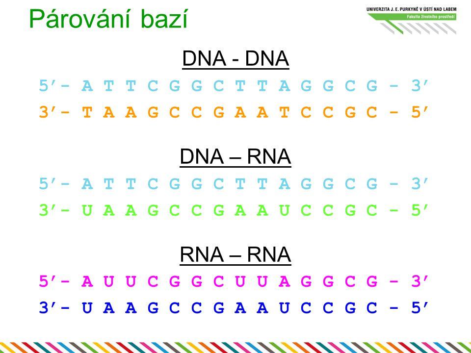 Párování bazí DNA - DNA DNA – RNA RNA – RNA