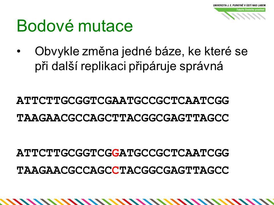 Bodové mutace Obvykle změna jedné báze, ke které se při další replikaci připáruje správná. ATTCTTGCGGTCGAATGCCGCTCAATCGG.