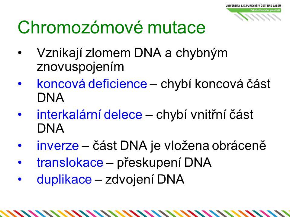 Chromozómové mutace Vznikají zlomem DNA a chybným znovuspojením