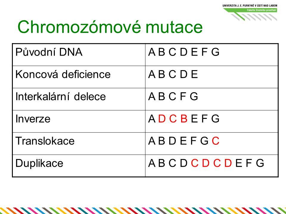 Chromozómové mutace Původní DNA A B C D E F G Koncová deficience
