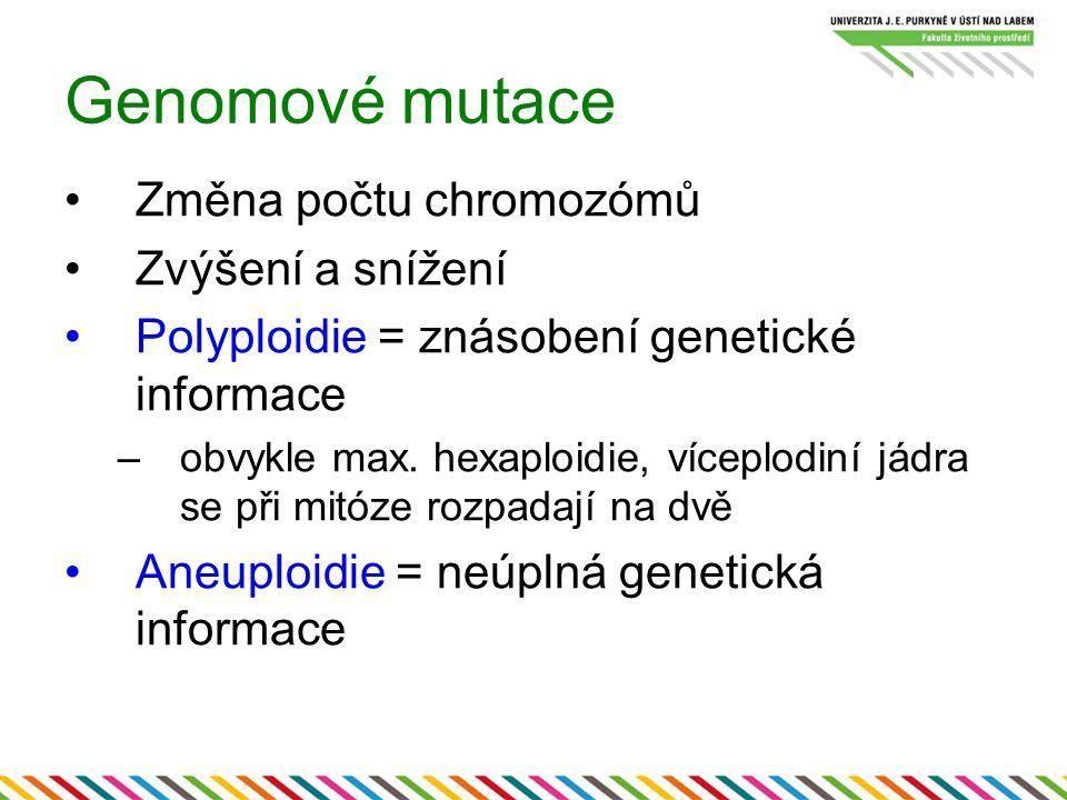 Genomové mutace Změna počtu chromozómů Zvýšení a snížení