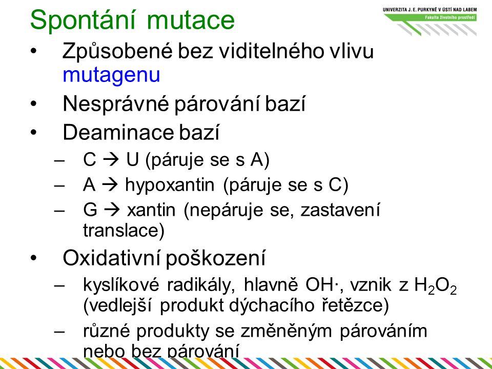 Spontání mutace Způsobené bez viditelného vlivu mutagenu