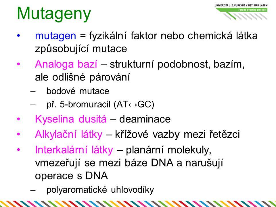 Mutageny mutagen = fyzikální faktor nebo chemická látka způsobující mutace. Analoga bazí – strukturní podobnost, bazím, ale odlišné párování.