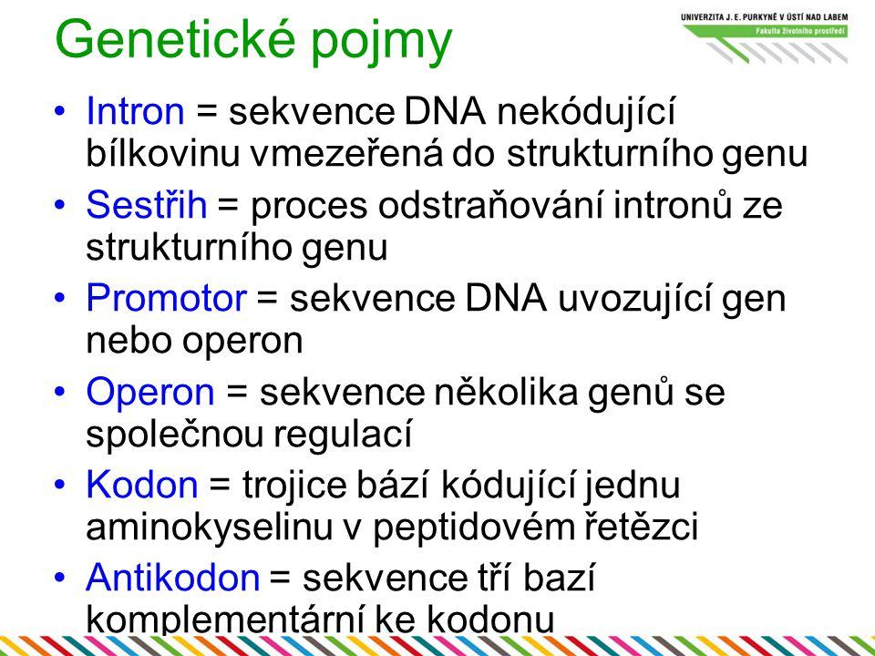 Genetické pojmy Intron = sekvence DNA nekódující bílkovinu vmezeřená do strukturního genu.