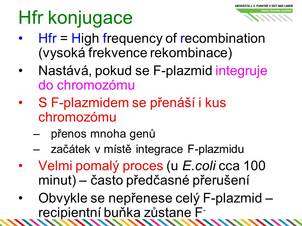 Hfr konjugace Hfr = High frequency of recombination (vysoká frekvence rekombinace) Nastává, pokud se F-plazmid integruje do chromozómu.