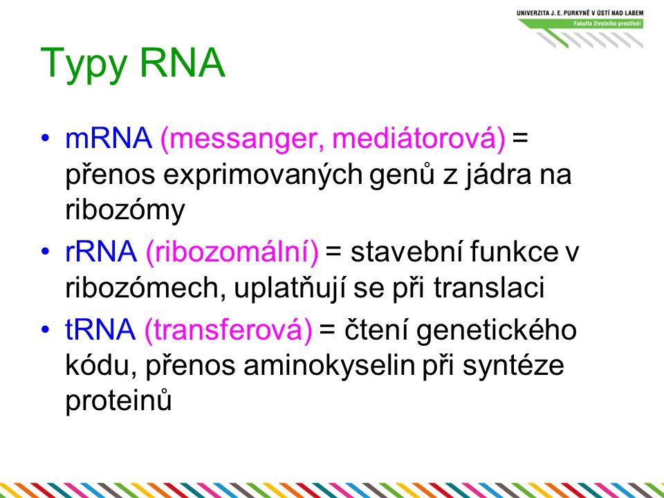 Typy RNA mRNA (messanger, mediátorová) = přenos exprimovaných genů z jádra na ribozómy.