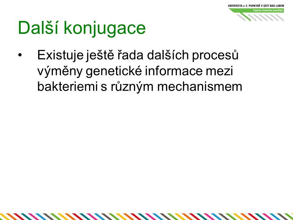Další konjugace Existuje ještě řada dalších procesů výměny genetické informace mezi bakteriemi s různým mechanismem.