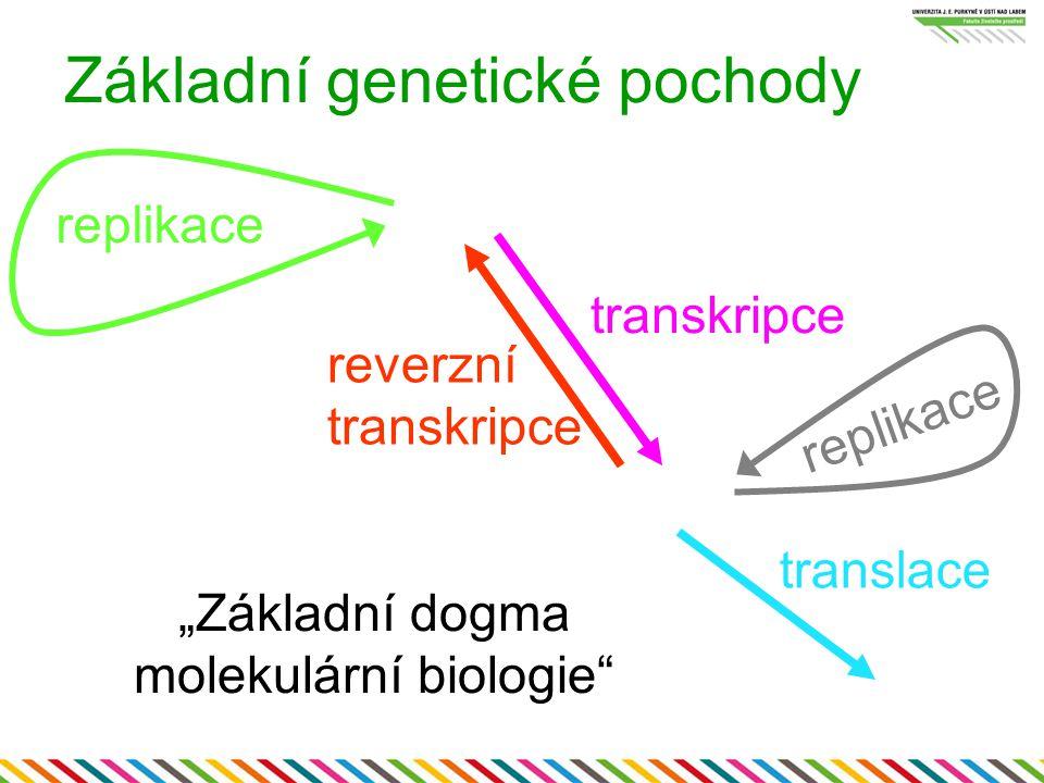 Základní genetické pochody