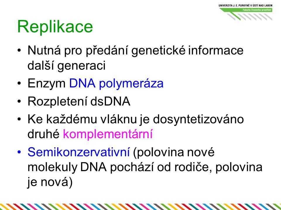 Replikace Nutná pro předání genetické informace další generaci