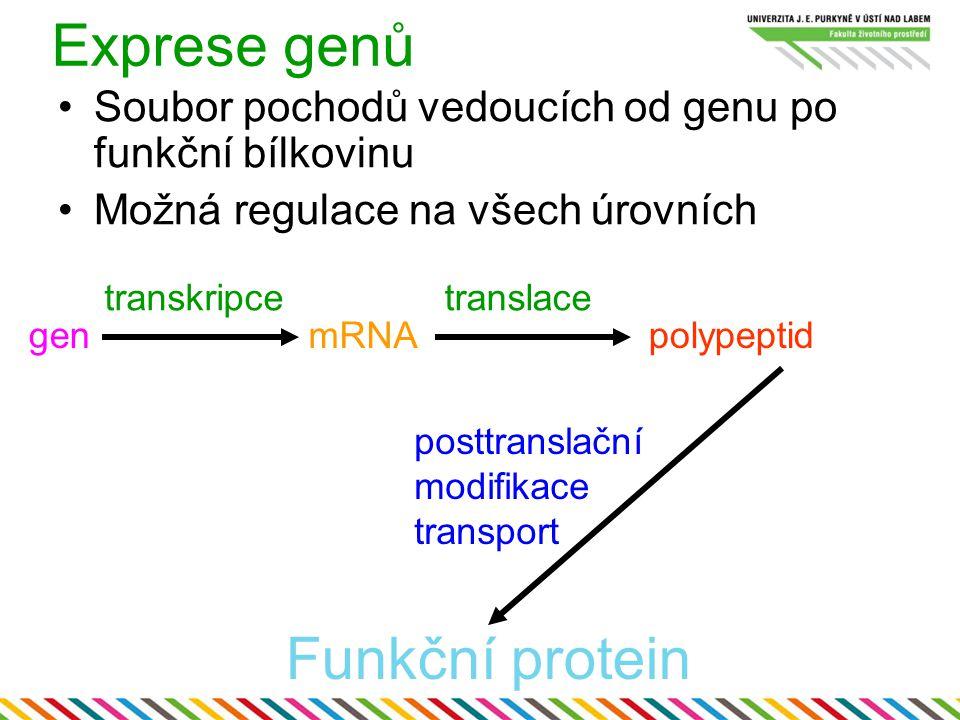 Exprese genů Funkční protein