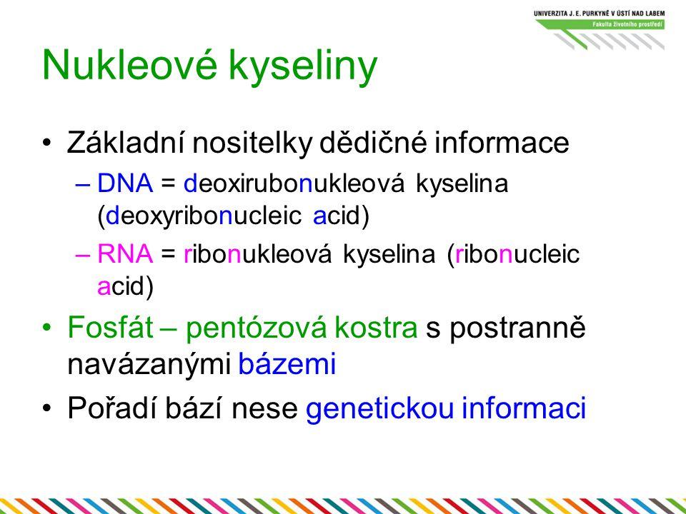 Nukleové kyseliny Základní nositelky dědičné informace