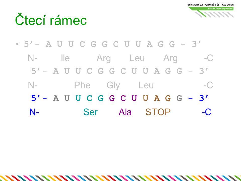 Čtecí rámec 5'- A U U C G G C U U A G G - 3' N- Ile Arg Leu Arg -C