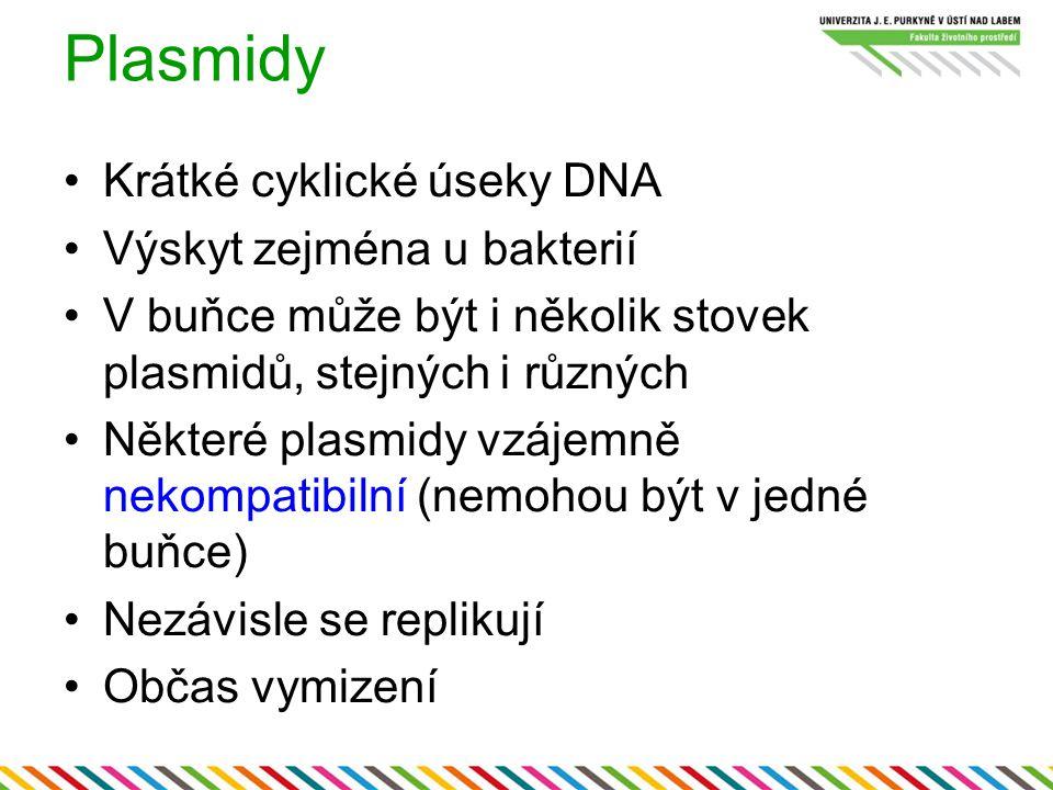 Plasmidy Krátké cyklické úseky DNA Výskyt zejména u bakterií