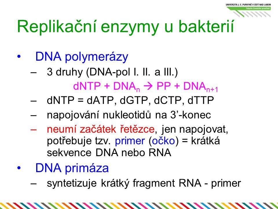 Replikační enzymy u bakterií