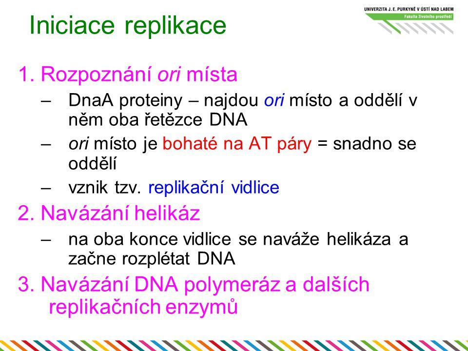 Iniciace replikace 1. Rozpoznání ori místa 2. Navázání helikáz