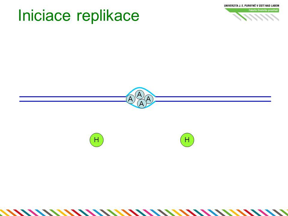 Iniciace replikace A A A A H H