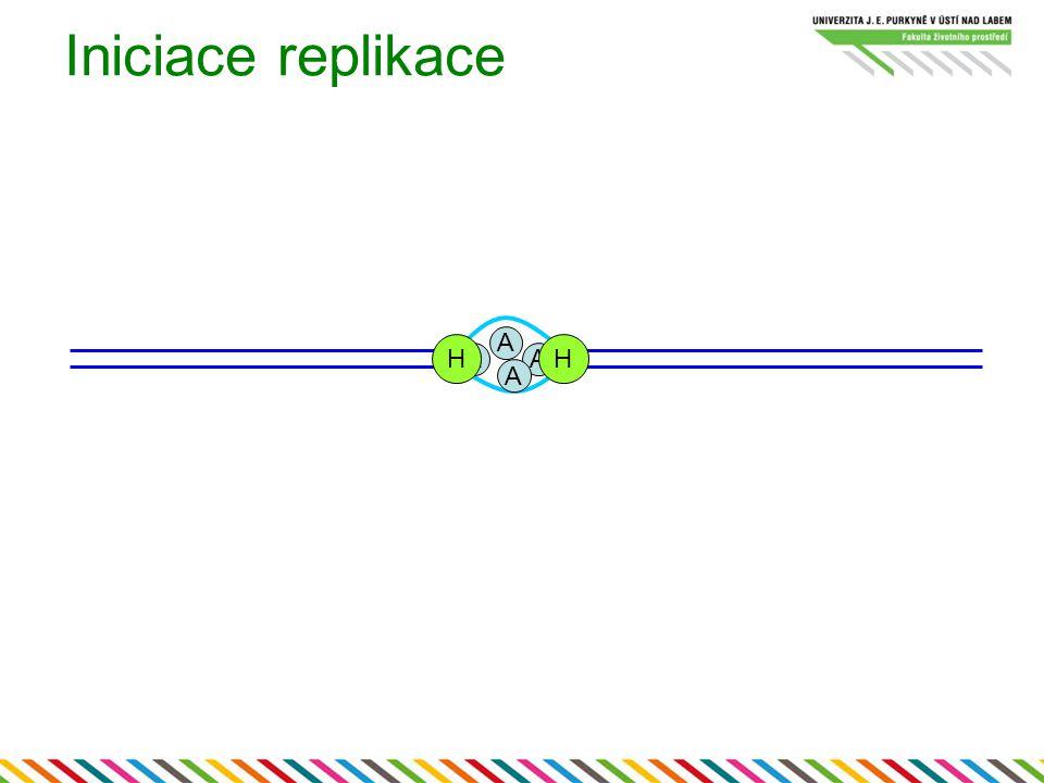 Iniciace replikace A H H A A A