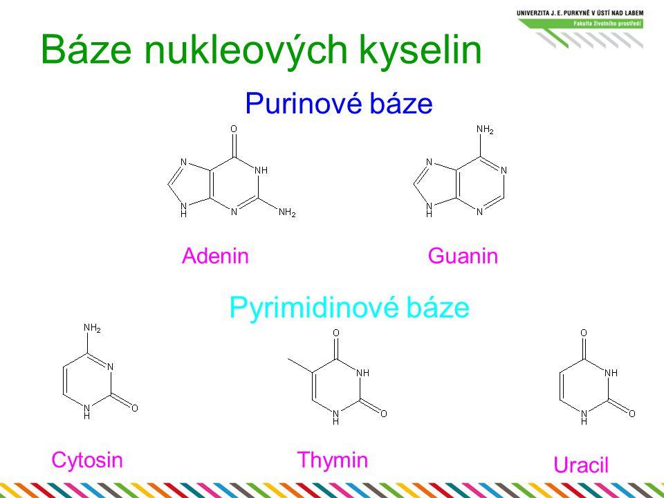 Báze nukleových kyselin