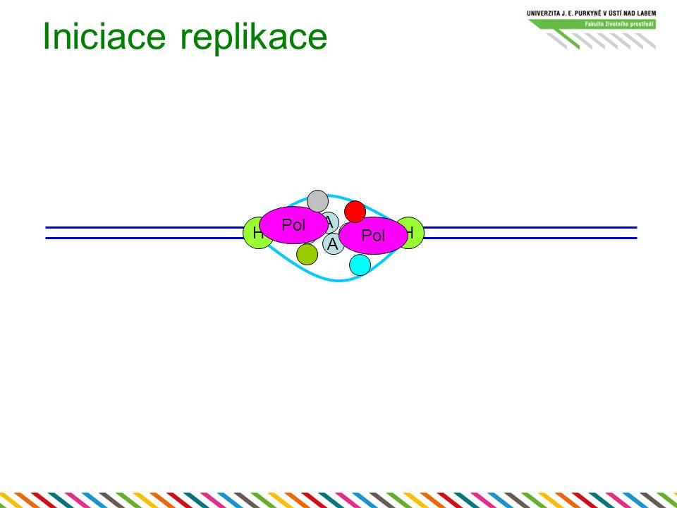 Iniciace replikace Pol A H Pol H A A A