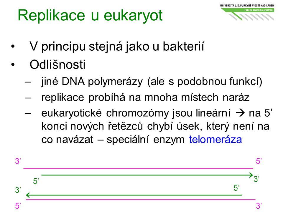 Replikace u eukaryot V principu stejná jako u bakterií Odlišnosti