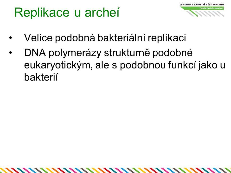 Replikace u archeí Velice podobná bakteriální replikaci