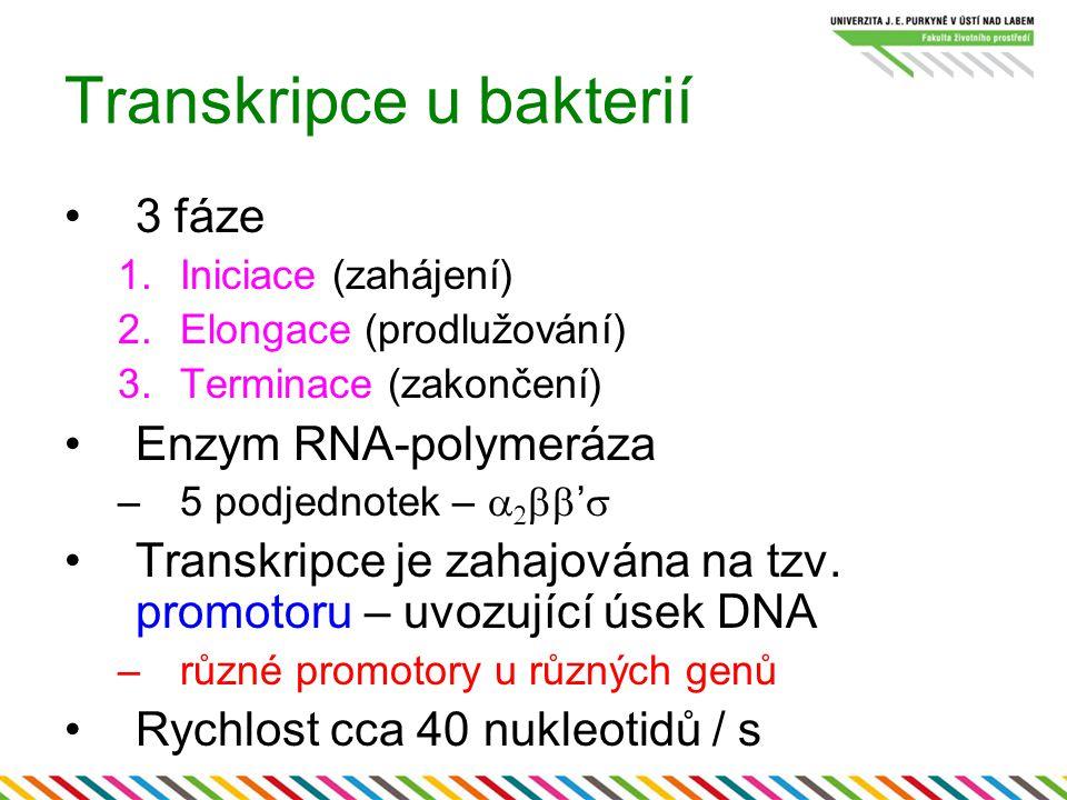 Transkripce u bakterií
