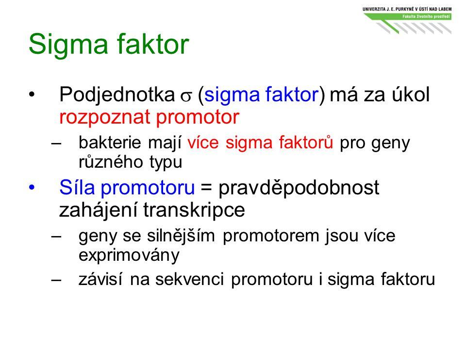 Sigma faktor Podjednotka s (sigma faktor) má za úkol rozpoznat promotor. bakterie mají více sigma faktorů pro geny různého typu.