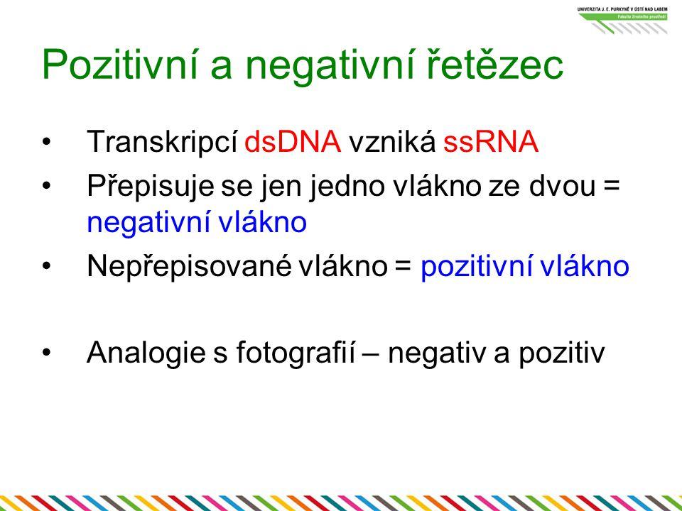 Pozitivní a negativní řetězec