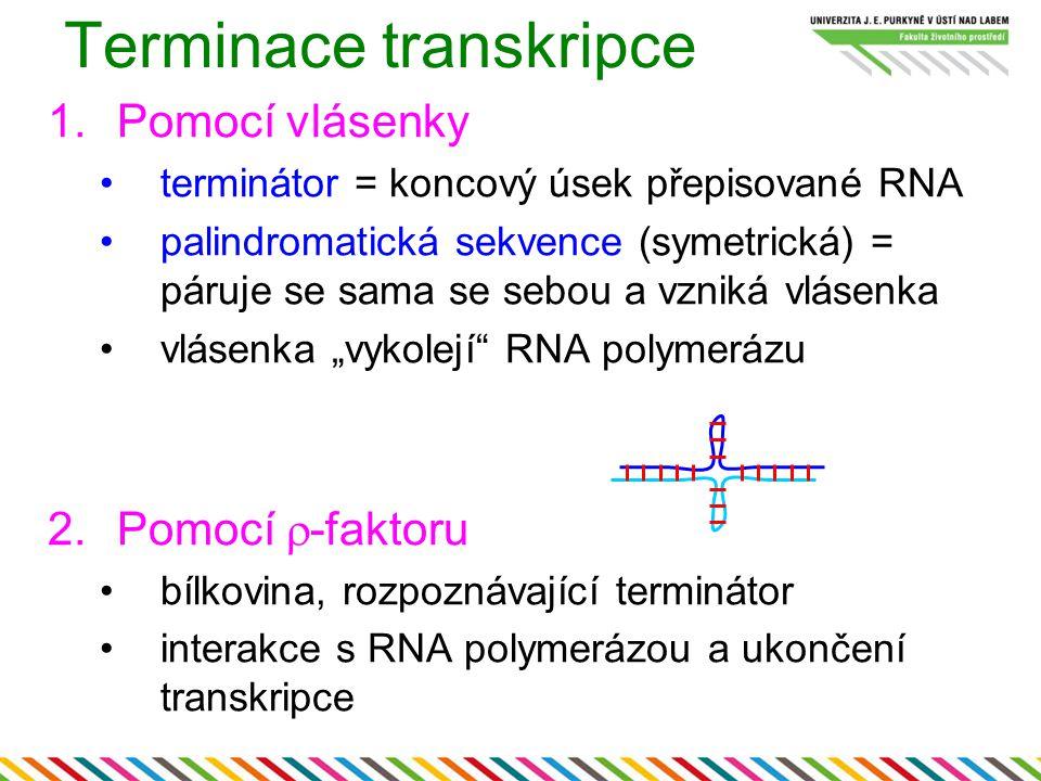Terminace transkripce