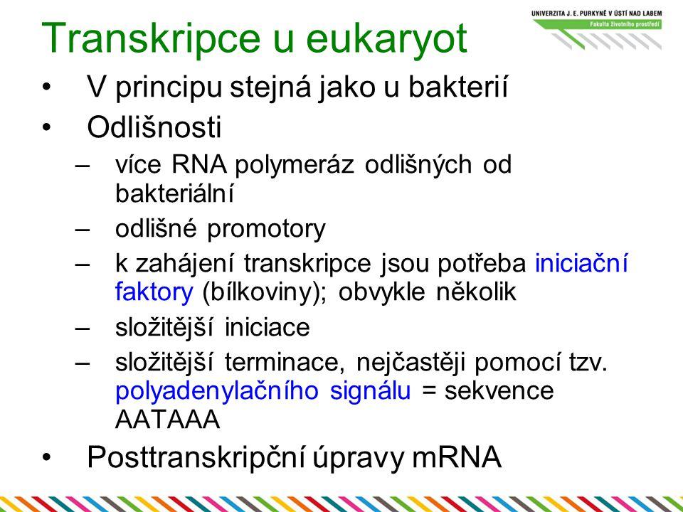 Transkripce u eukaryot