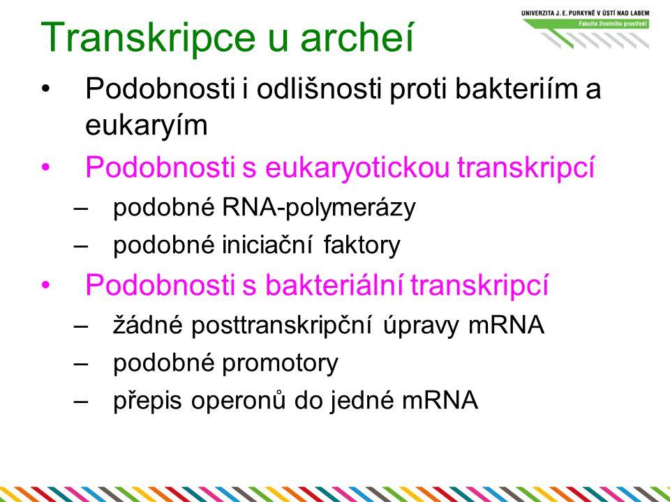 Transkripce u archeí Podobnosti i odlišnosti proti bakteriím a eukaryím. Podobnosti s eukaryotickou transkripcí.