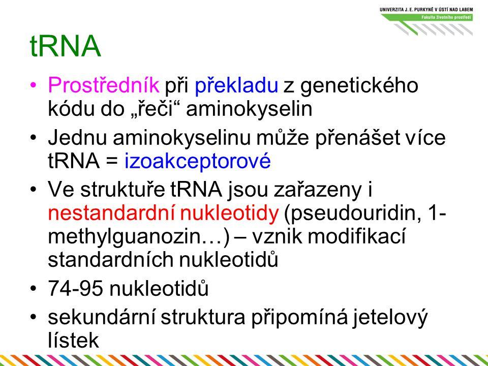 """tRNA Prostředník při překladu z genetického kódu do """"řeči aminokyselin. Jednu aminokyselinu může přenášet více tRNA = izoakceptorové."""