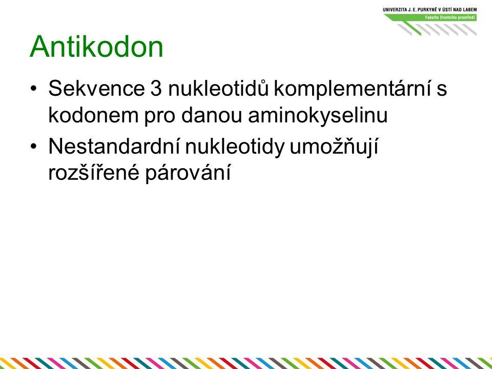 Antikodon Sekvence 3 nukleotidů komplementární s kodonem pro danou aminokyselinu.