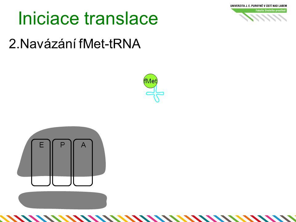 Iniciace translace 2.Navázání fMet-tRNA fMet E P A