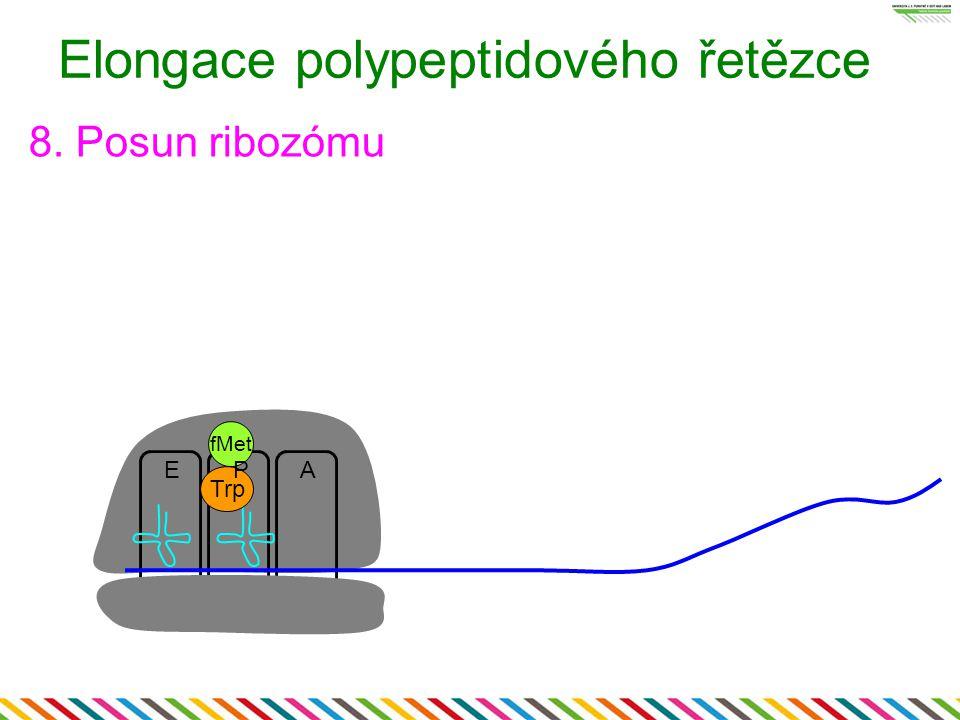 Elongace polypeptidového řetězce