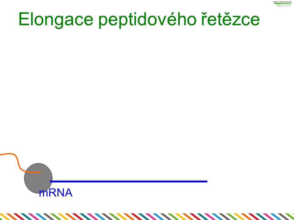 Elongace peptidového řetězce