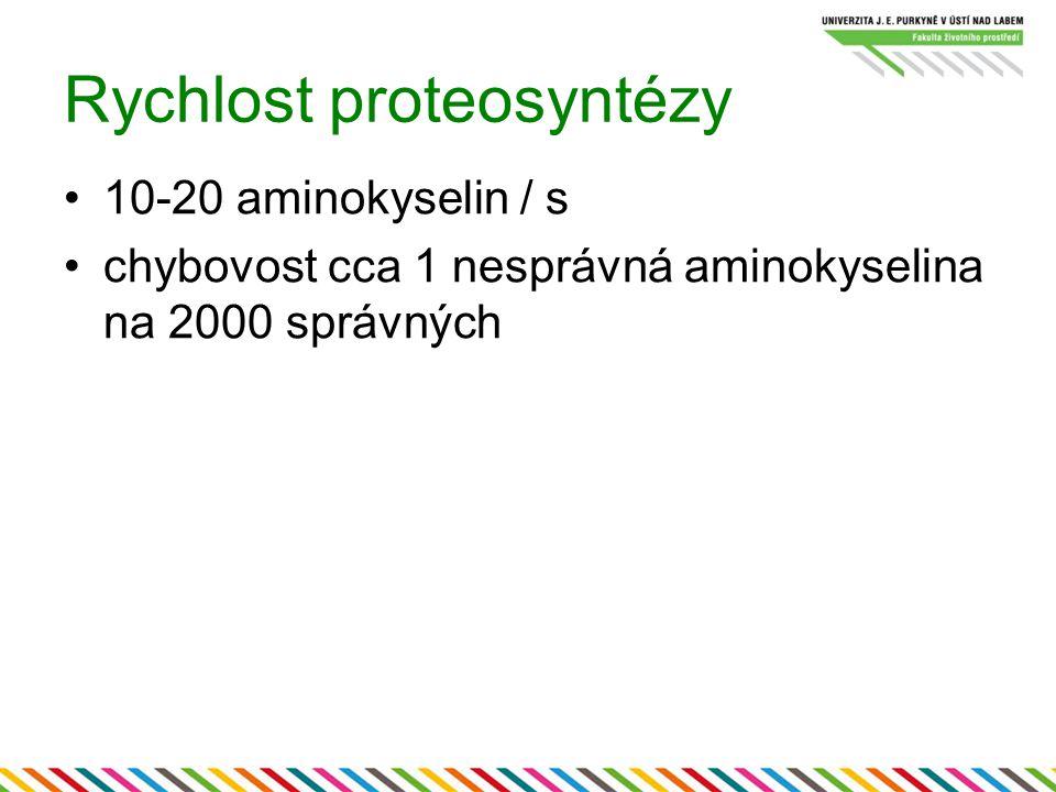 Rychlost proteosyntézy