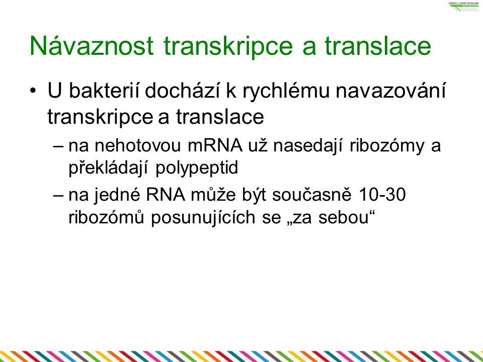 Návaznost transkripce a translace