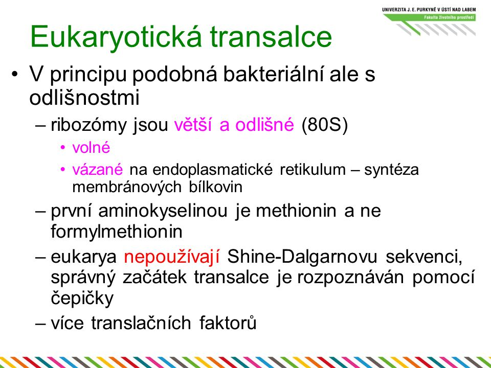 Eukaryotická transalce