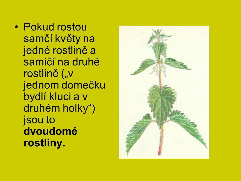 """Pokud rostou samčí květy na jedné rostlině a samičí na druhé rostlině (""""v jednom domečku bydlí kluci a v druhém holky ) jsou to dvoudomé rostliny."""