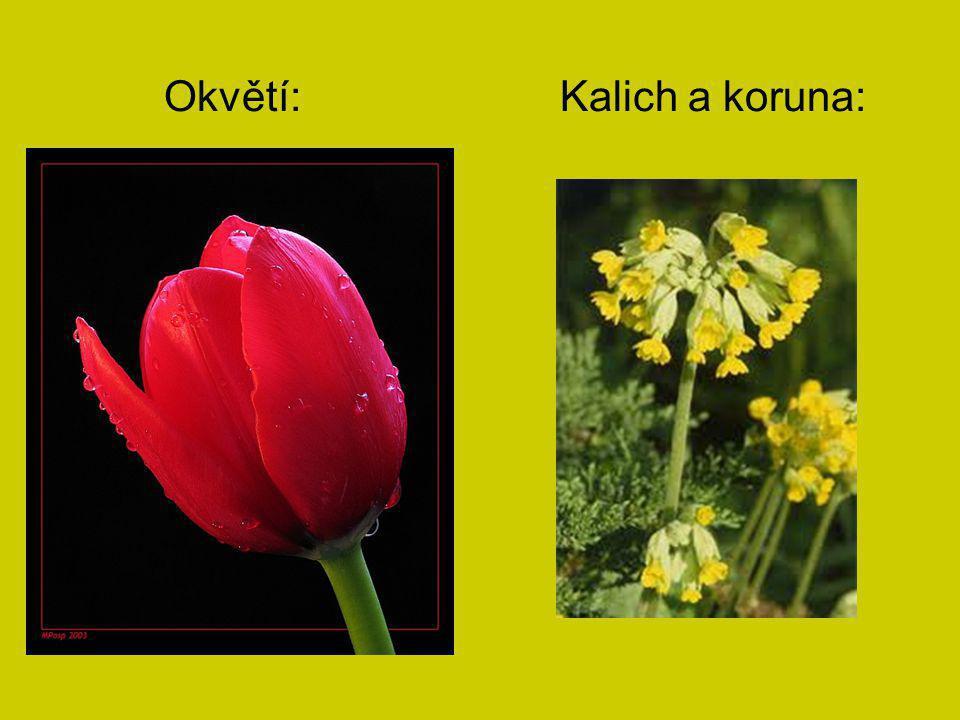 Okvětí: Kalich a koruna: