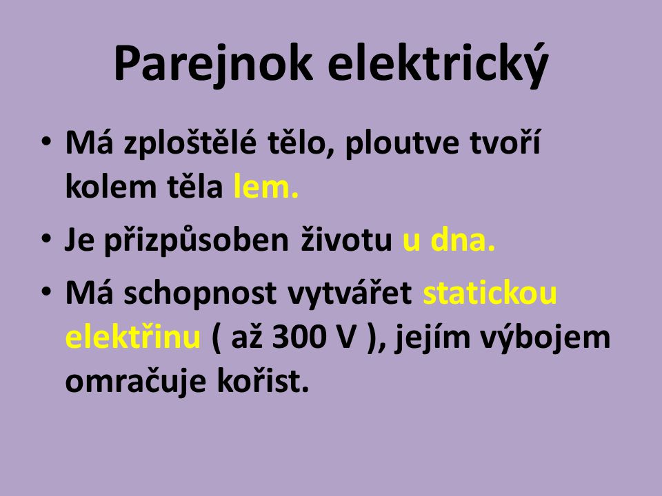Parejnok elektrický Má zploštělé tělo, ploutve tvoří kolem těla lem.