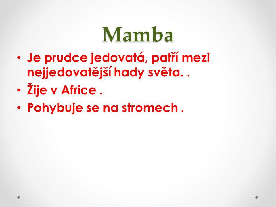 Mamba Je prudce jedovatá, patří mezi nejjedovatější hady světa. .
