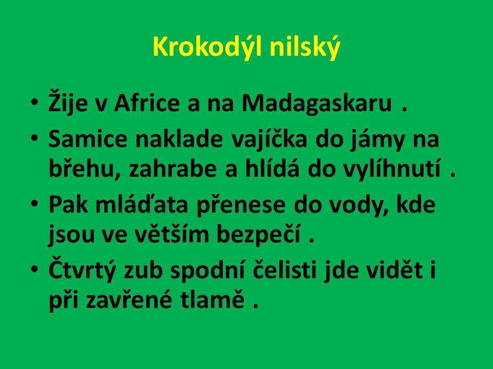 Krokodýl nilský Žije v Africe a na Madagaskaru .