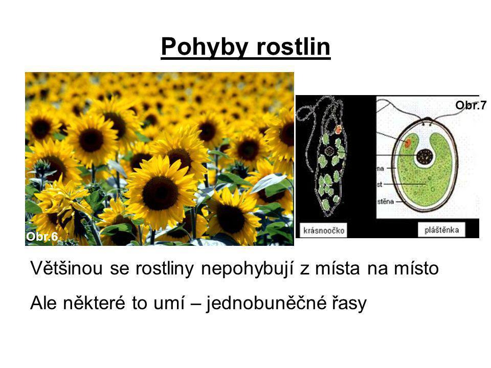 Pohyby rostlin Většinou se rostliny nepohybují z místa na místo