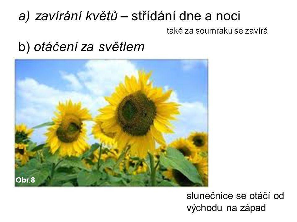 zavírání květů – střídání dne a noci b) otáčení za světlem