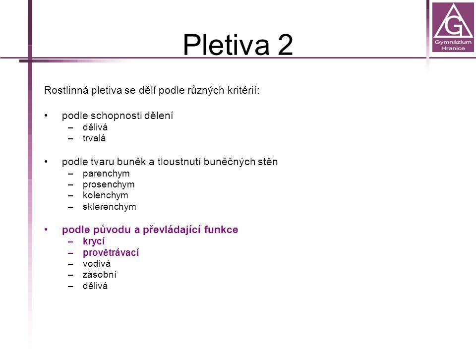 Pletiva 2 Rostlinná pletiva se dělí podle různých kritérií: