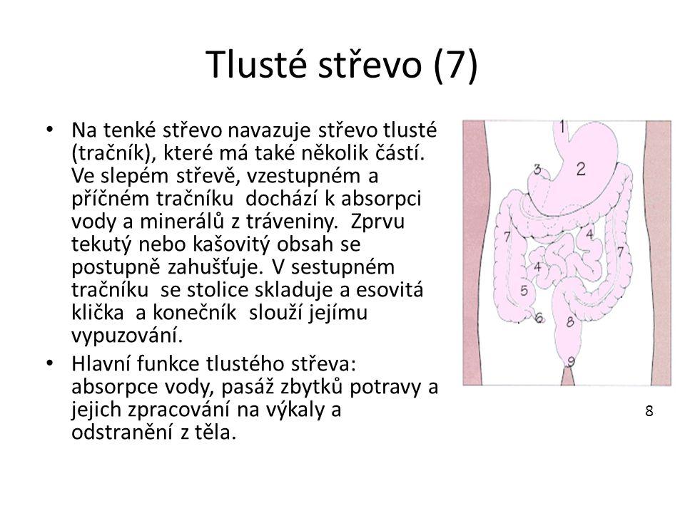 Tlusté střevo (7) 8.