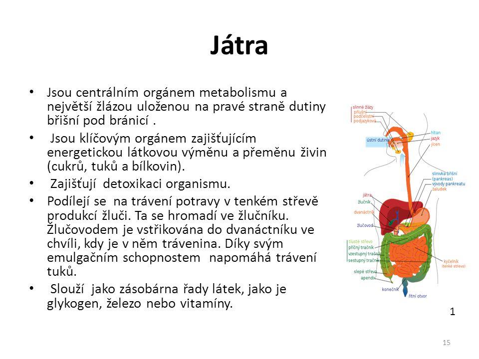 Játra Jsou centrálním orgánem metabolismu a největší žlázou uloženou na pravé straně dutiny břišní pod bránicí .